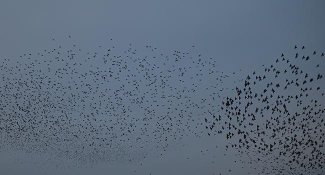 Kuşların harika dansı