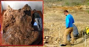 7 milyon yıllık kaplumbağa fosili gün yüzüne çıkarıldı